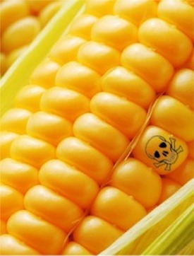 Corn-with-poison-symbol.jpg
